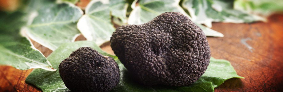 Truffles - The Diamonds of the Culinary World